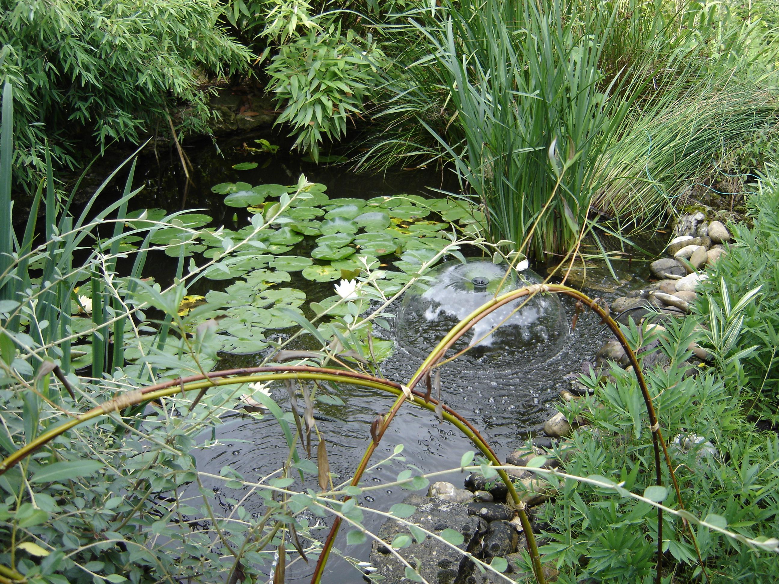 bassin001.jpg